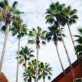 Auf Wiedersehen Florida, du wunderschöner Fleck Erde